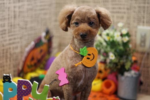 10月18日ご来店のワンちゃんです!!_b0130018_23081409.jpg