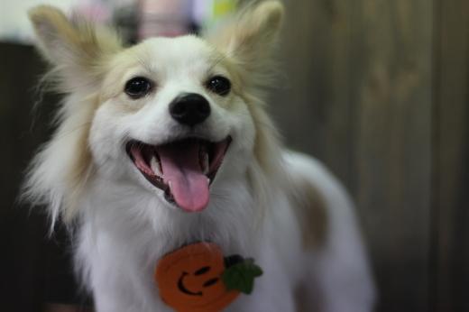 10月18日ご来店のワンちゃんです!!_b0130018_23130053.jpg