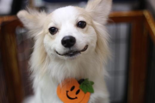 10月18日ご来店のワンちゃんです!!_b0130018_23140411.jpg