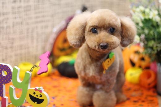 10月18日ご来店のワンちゃんです!!_b0130018_23160143.jpg