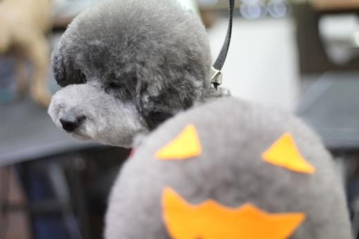 10月18日ご来店のワンちゃんです!!_b0130018_23374766.jpg