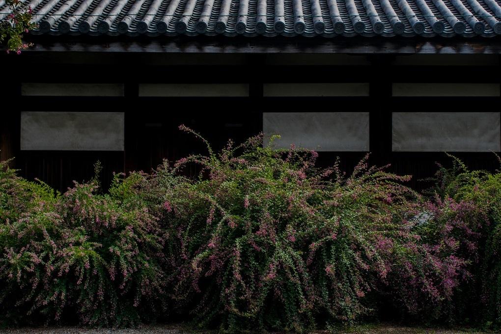 元興寺の萩と季節の花々_e0363038_14592967.jpg