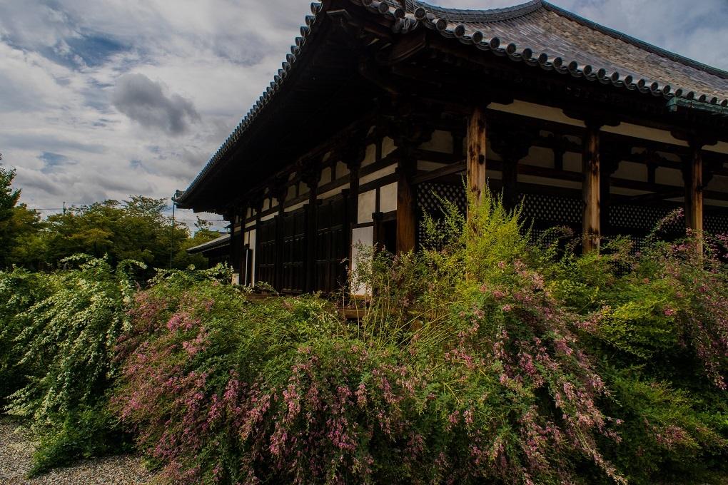 元興寺の萩と季節の花々_e0363038_14593981.jpg