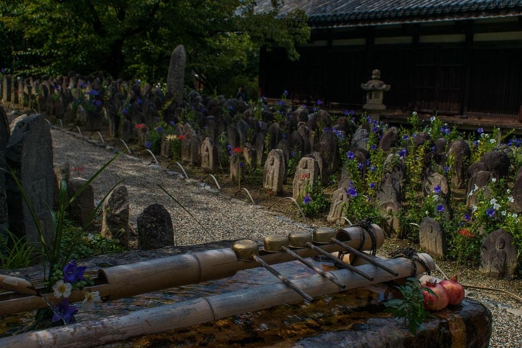 元興寺の萩と季節の花々_e0363038_14594816.jpg