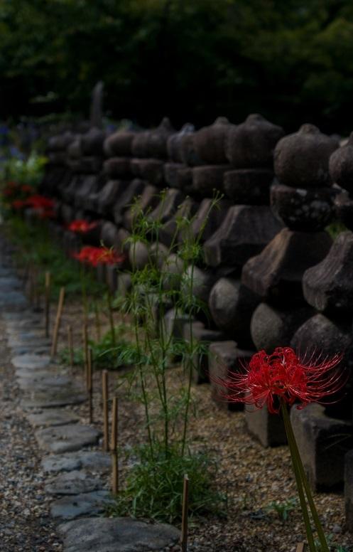 元興寺の萩と季節の花々_e0363038_14595445.jpg