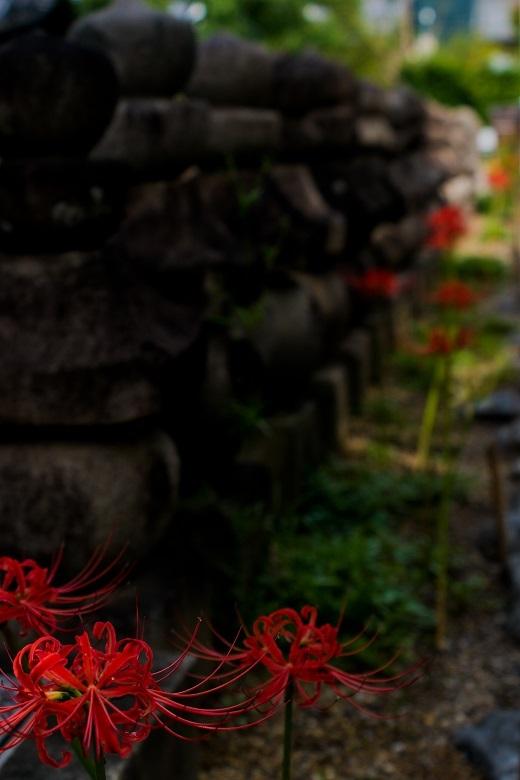 元興寺の萩と季節の花々_e0363038_14595853.jpg