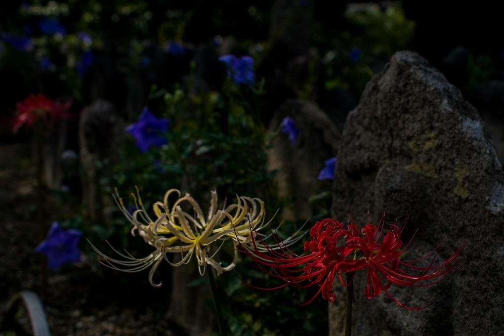 元興寺の萩と季節の花々_e0363038_15000318.jpg