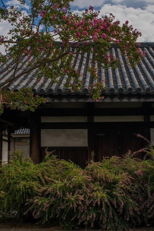 元興寺の萩と季節の花々_e0363038_15000850.jpg