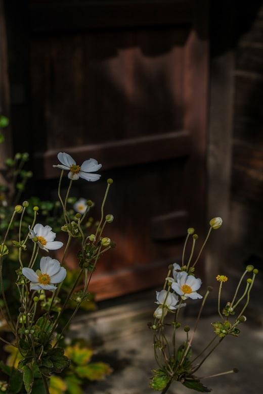 元興寺の萩と季節の花々_e0363038_15001254.jpg