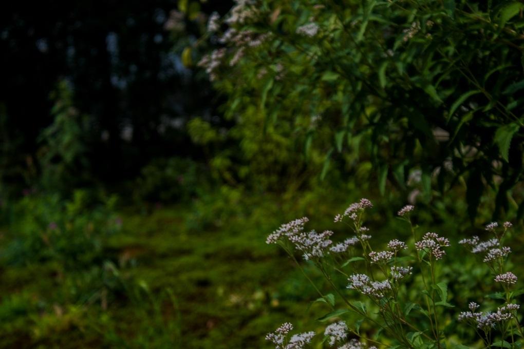 元興寺の萩と季節の花々_e0363038_15001755.jpg