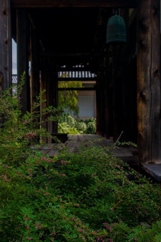 元興寺の萩と季節の花々_e0363038_15002103.jpg