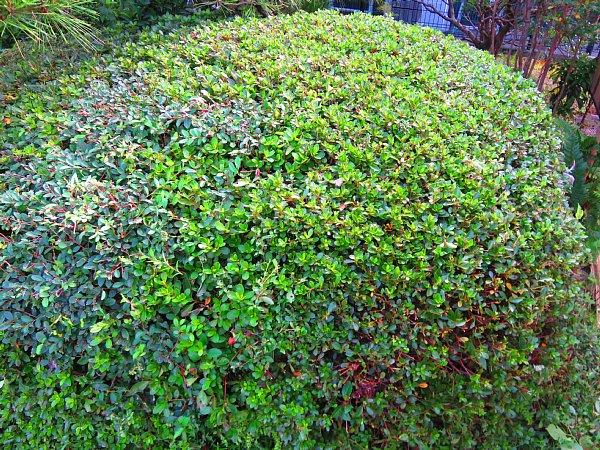 2018年10月22日 庭木の剪定 !(^^)!_b0341140_2213826.jpg
