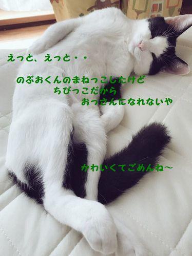d0393041_23301292.jpg