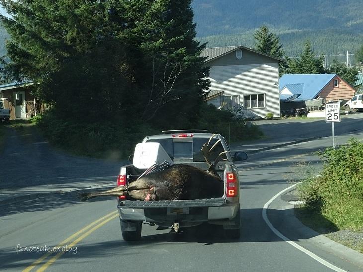 Moose を頂く_d0356844_07532455.jpg