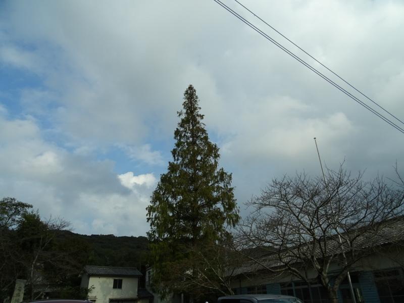 杉・檜丸太の皮剥き・・・孝子の森_c0108460_17464621.jpg