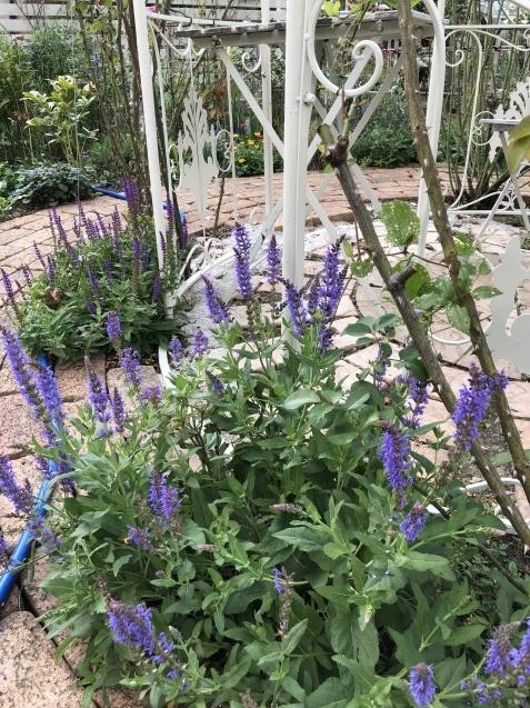 10月の庭「メインガーデンの様子」_a0243064_16333828.jpg