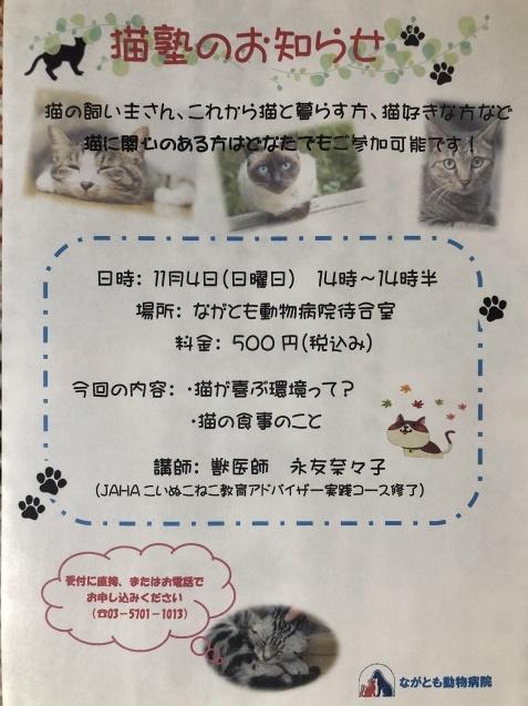 猫塾って?_e0367571_20094977.jpg