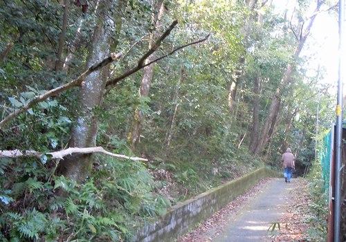 路傍の花、樹々の鳥(228) ~ 延喜式内神社へと続く小道を歩く ~ _b0102572_16562947.jpg