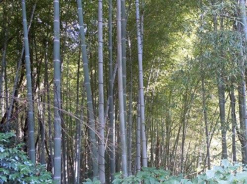 路傍の花、樹々の鳥(228) ~ 延喜式内神社へと続く小道を歩く ~ _b0102572_16565110.jpg