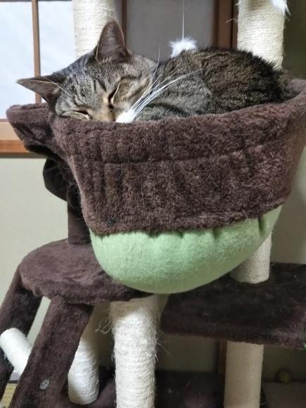 不安定な猫壺にそ〜っと進呈_f0316507_22092534.jpg