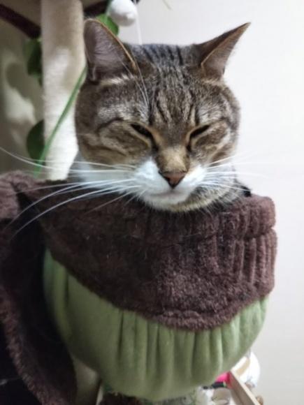 不安定な猫壺にそ〜っと進呈_f0316507_22120470.jpg