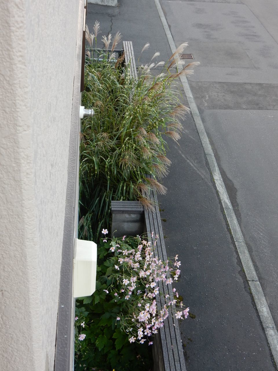 今朝は札幌の公式初霜宣言_c0025115_23040081.jpg
