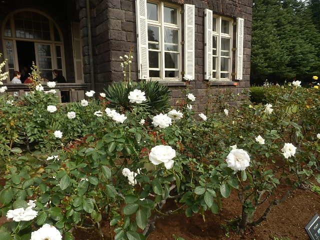 秋バラを楽しみに旧古河庭園へ_e0378686_10010528.jpg