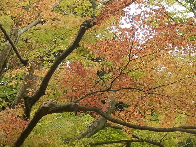 秋バラを楽しみに旧古河庭園へ_e0378686_10031110.jpg