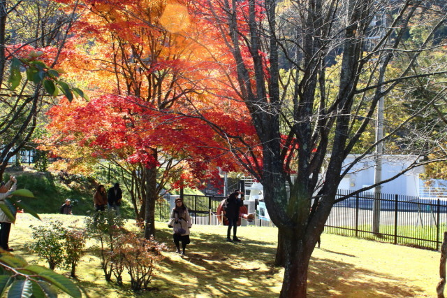 夕張・滝ノ上公園ほかの紅葉_c0360399_22311115.jpg