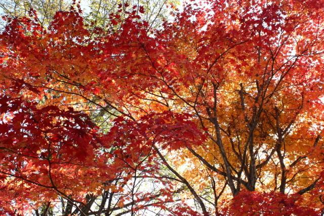 夕張・滝ノ上公園ほかの紅葉_c0360399_22314057.jpg