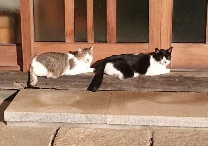 猫筥2つ_e0246300_09291859.jpg