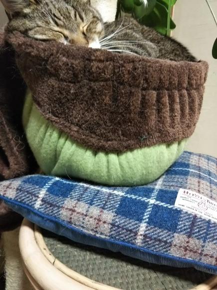 不安定な猫壺にそ〜っと進呈_f0316507_20362081.jpg
