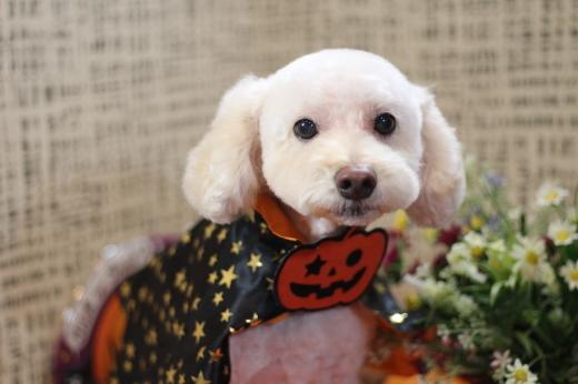10月20日にご来店のワンちゃんです!!_b0130018_22263641.jpg