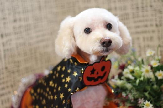 10月20日にご来店のワンちゃんです!!_b0130018_22265575.jpg