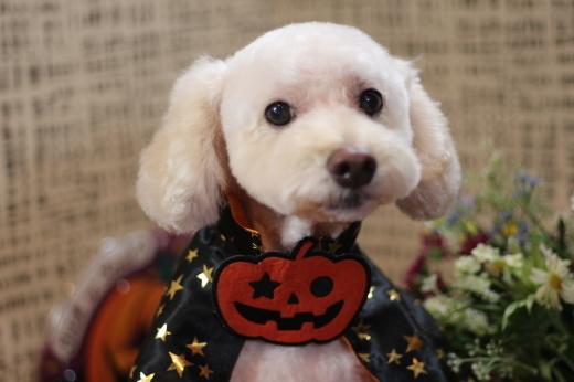 10月20日にご来店のワンちゃんです!!_b0130018_22271517.jpg