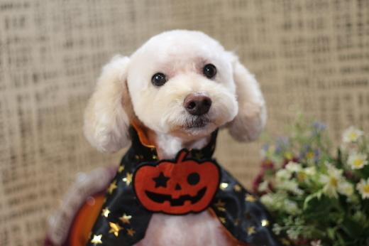 10月20日にご来店のワンちゃんです!!_b0130018_22274424.jpg