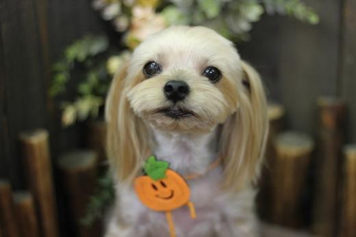 10月20日にご来店のワンちゃんです!!_b0130018_22304627.jpg