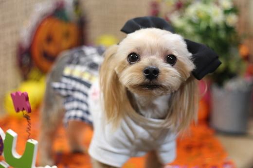 10月20日にご来店のワンちゃんです!!_b0130018_22325464.jpg