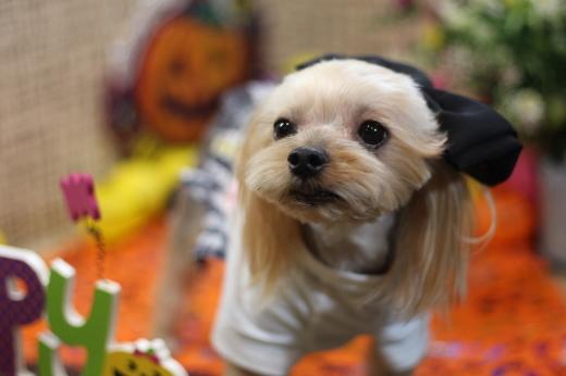 10月20日にご来店のワンちゃんです!!_b0130018_22332231.jpg