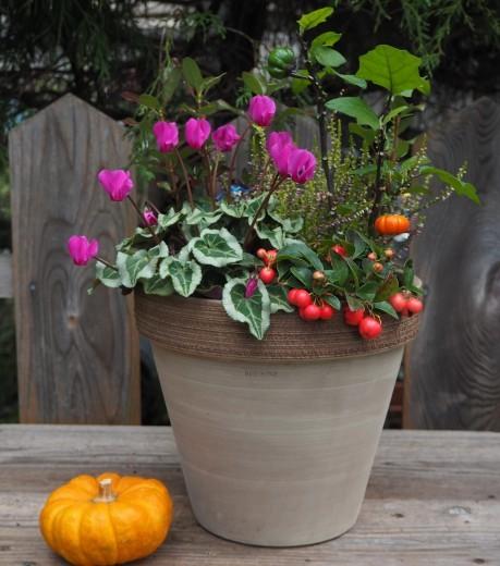 実りの秋を楽しむ寄せ植え_f0139333_00013342.jpg