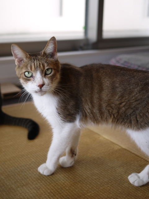 猫のお留守番 ウィンクくん編。_a0143140_22204371.jpg