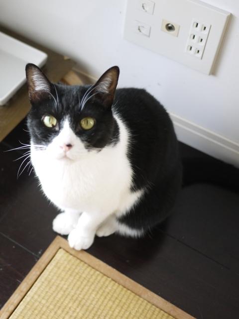 猫のお留守番 ピケちゃん編。_a0143140_22290238.jpg