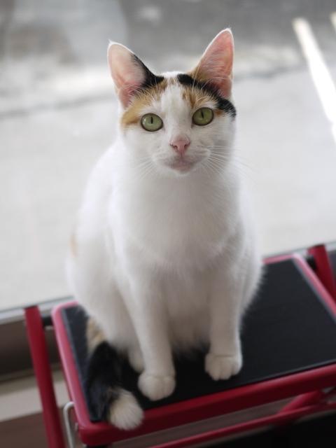 猫のお留守番 エンジェルちゃん編。_a0143140_22315554.jpg