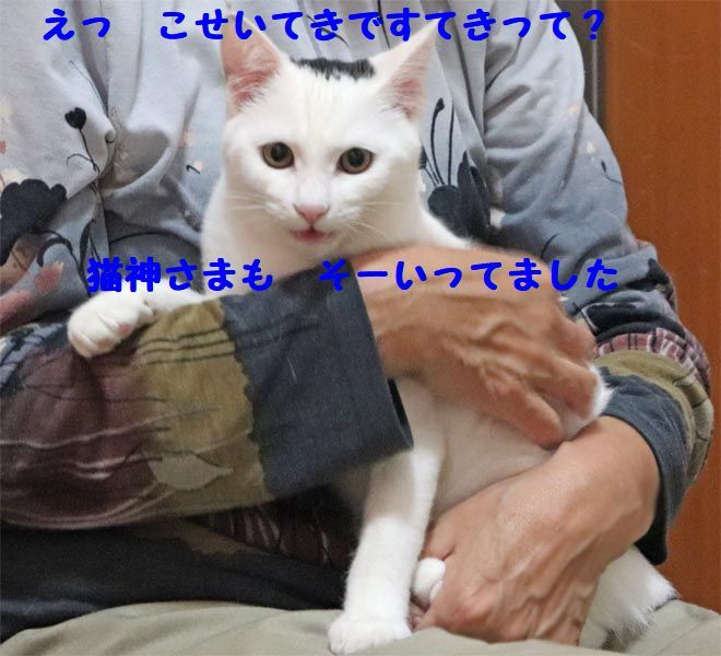d0393041_23031483.jpg