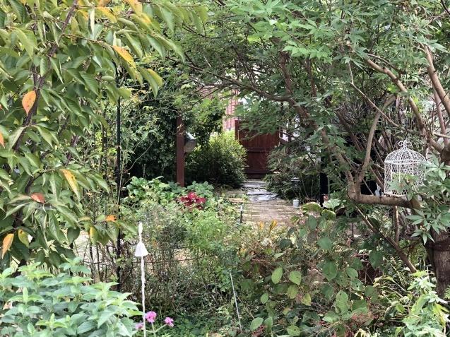 10月の庭「ガーデンハウス辺りの様子」_a0243064_08292470.jpg