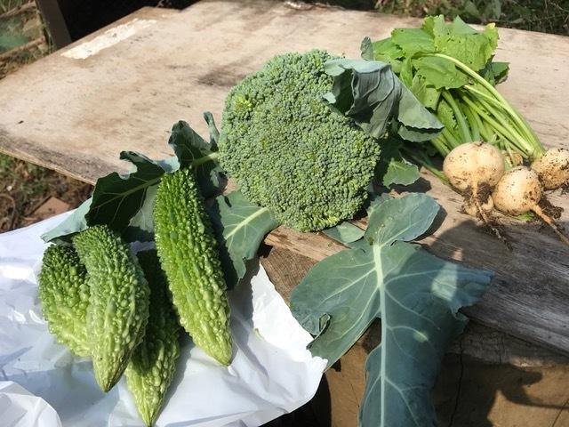 ダイコン、ブロッコリー、コカブ初収穫:季節の野菜の主役交代10・18、21_c0014967_21422865.jpg