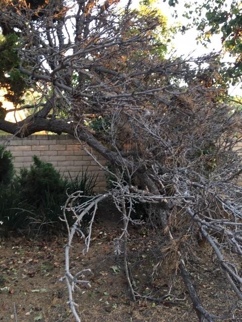 強風 -Santa Ana Wind_e0350971_15472620.jpg