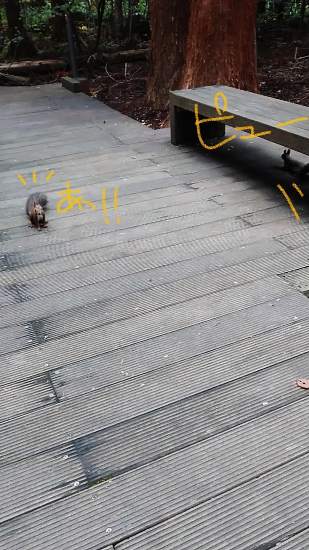 円山公園散策というか円山登山?_e0167593_23322110.jpg