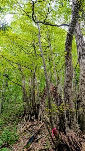 円山公園散策というか円山登山?_e0167593_23342879.jpg