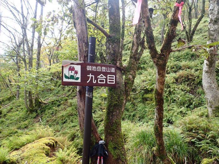 御池岳登山_a0049296_06364557.jpg